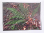 Note Card - Chemainus Fern - Direct Print