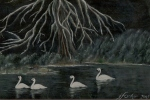 Swans on the Tlell, Acrylic - NOT FOR SALE